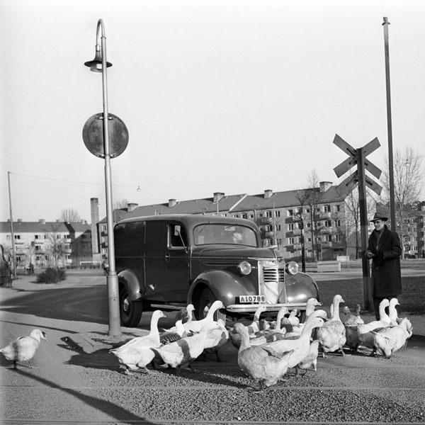Sofielundsplan-gäss-1948