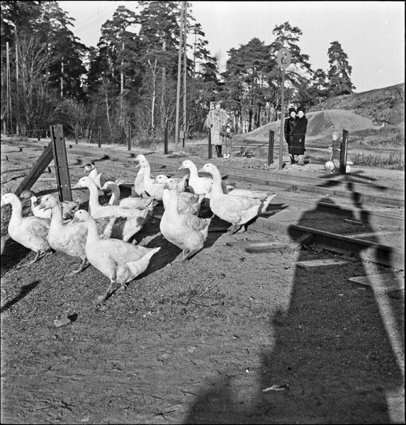 Sofielundsplan-gäss-berg-1948.jpg
